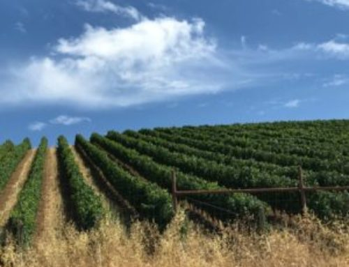 The Wine, Food and Vibe of Paso Robles Wine Region